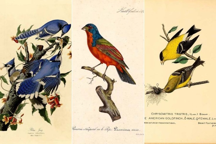 Beautiful Images Of American Songbirds To Download