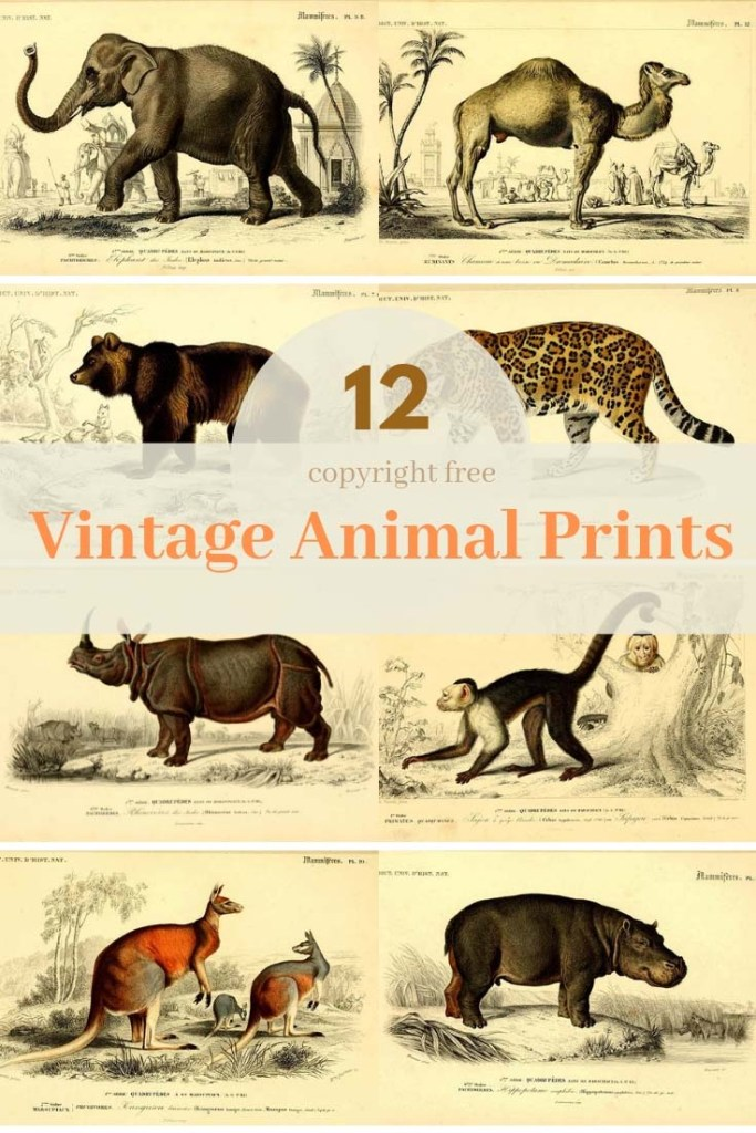 12 free antique animal paintings