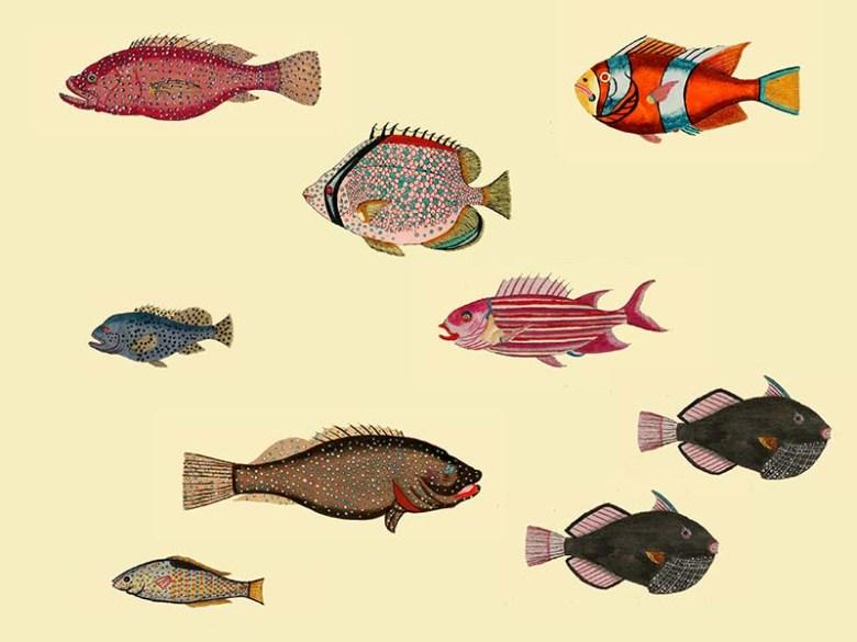 Aquarium 2 Louis Renard