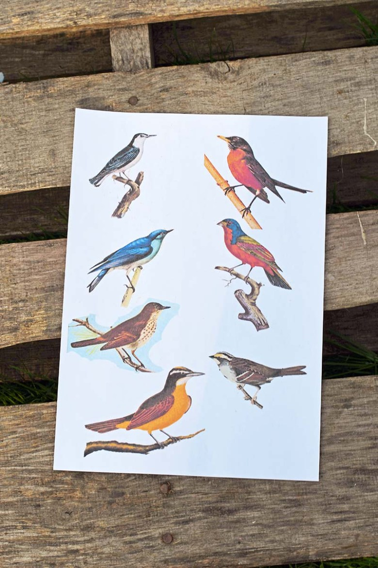 Song bird print outs.