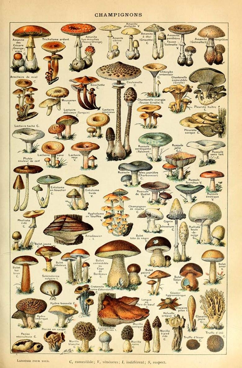 Mushroom botanical poster