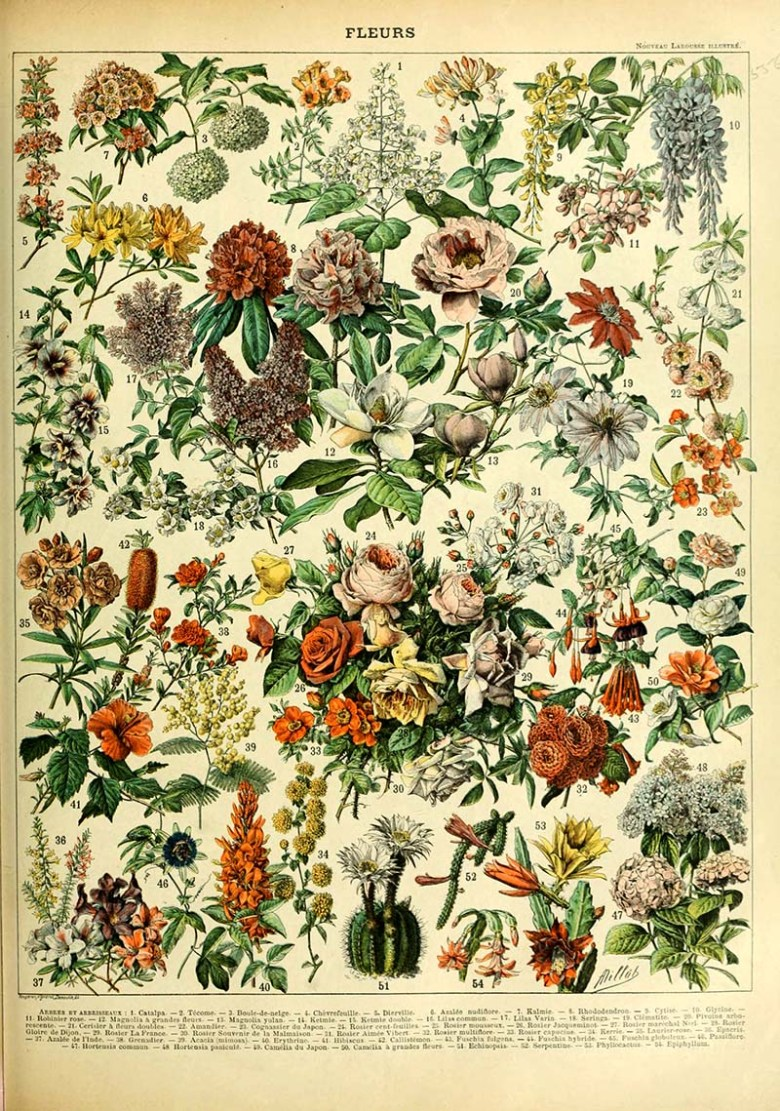 Adolphe Millot Flowers C