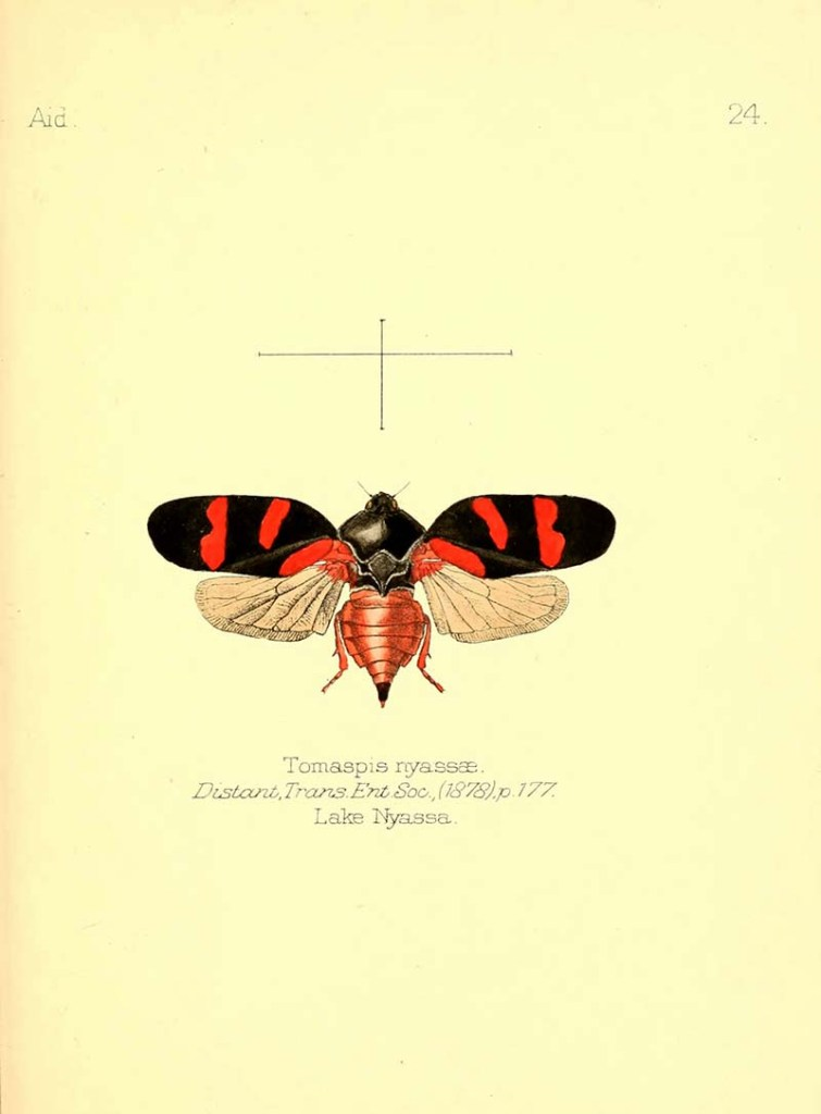 Red winged copyright free insect print