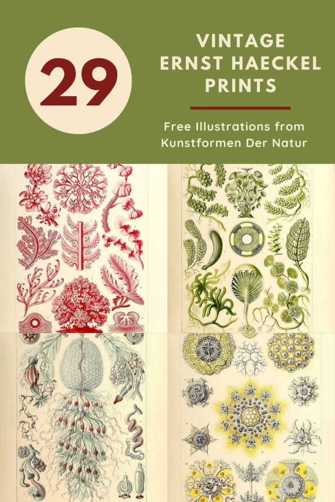Free Ernst Haeckel Illustrations