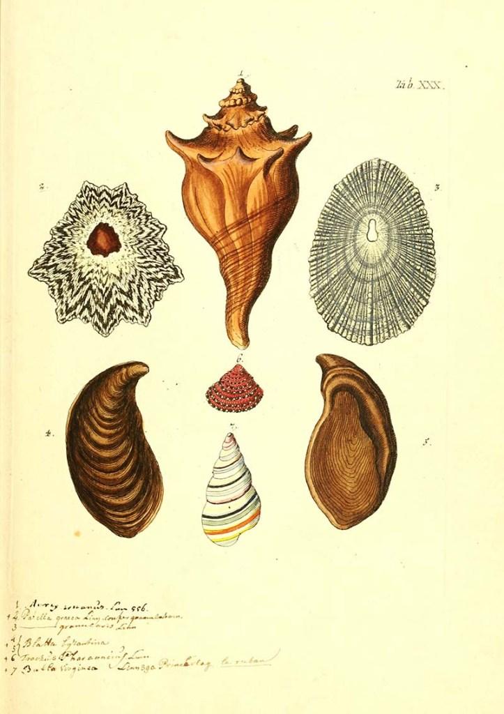 shell drawings