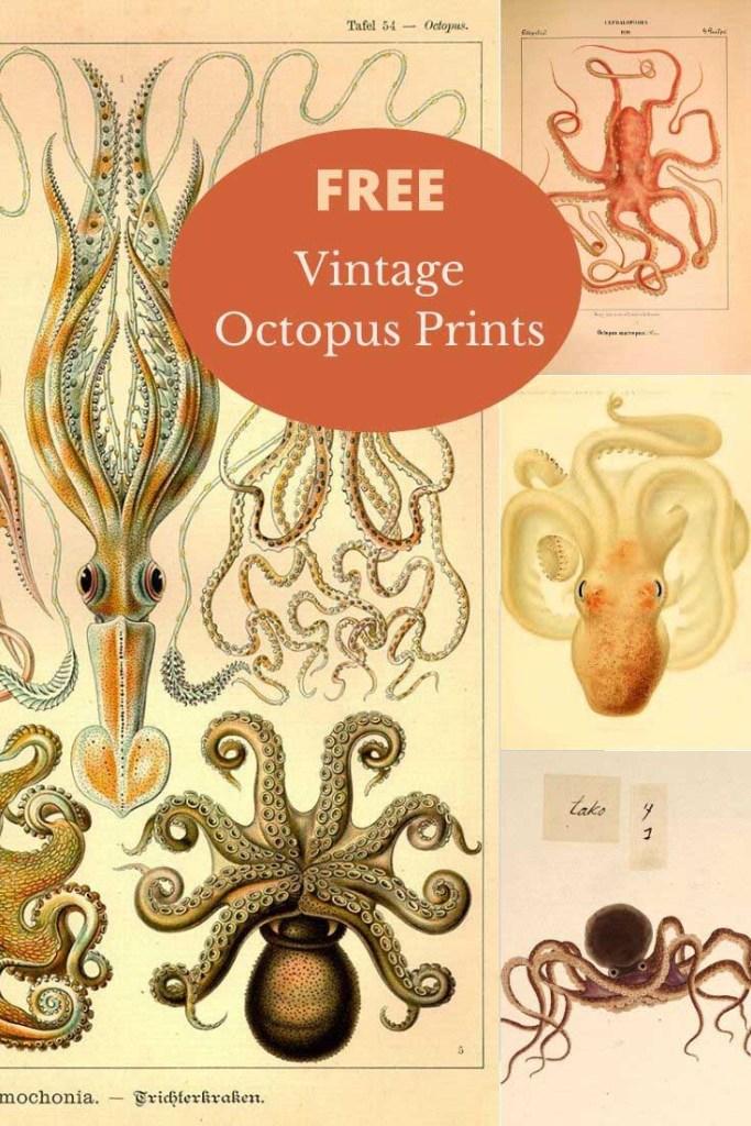 pubic domain octopus prints