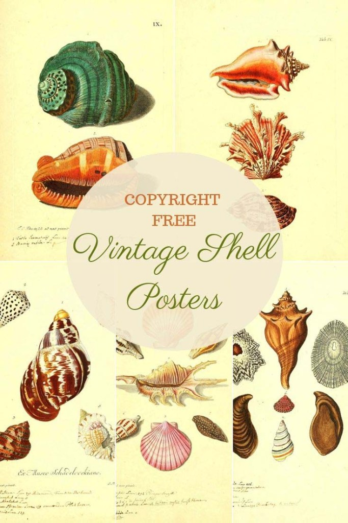 vintage sea shells posters