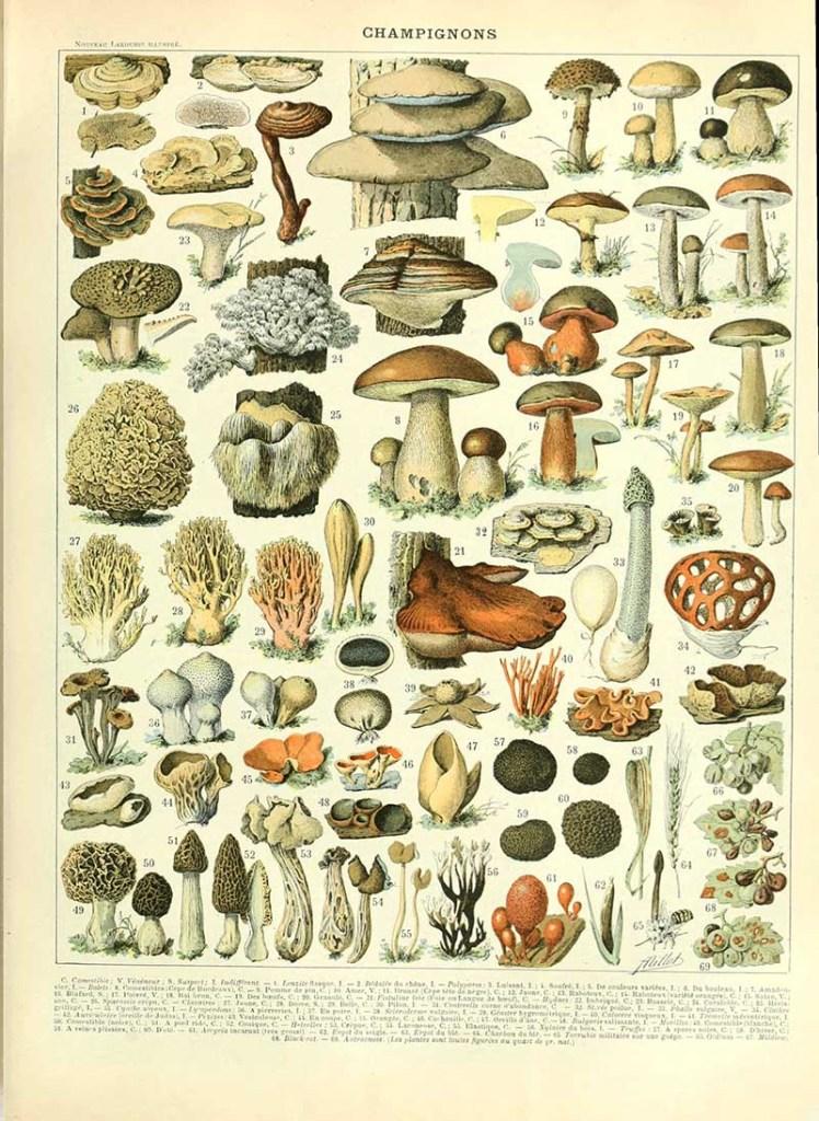 Adolphe Millot Mushroom chart
