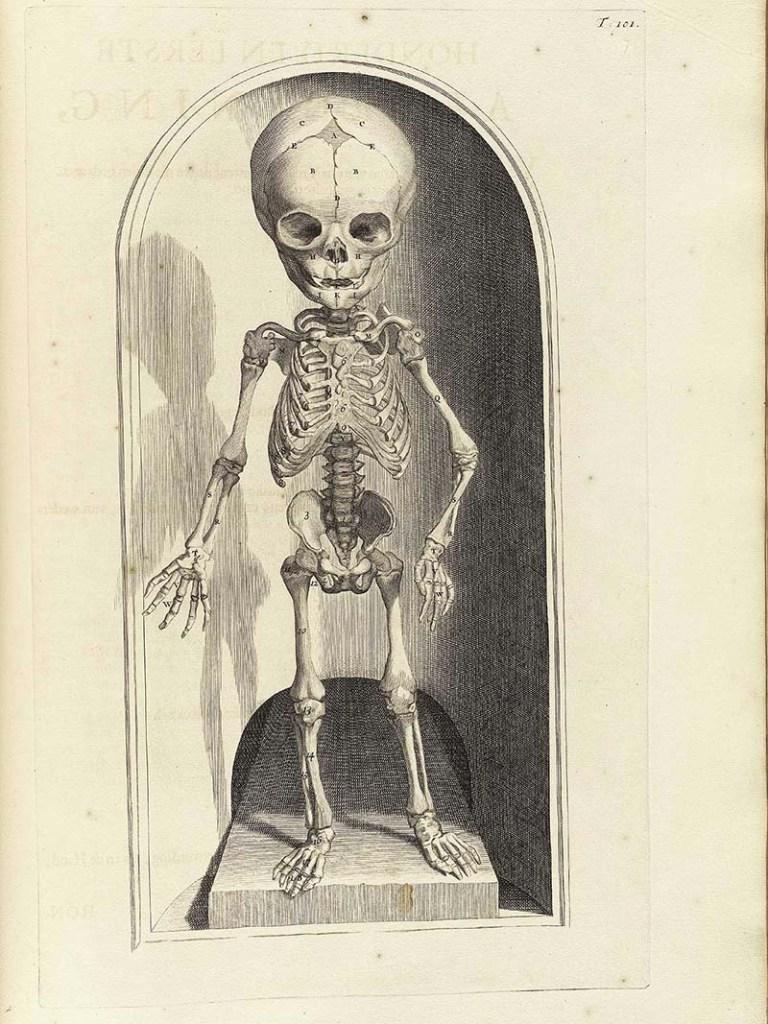 Child Skeleton Picture