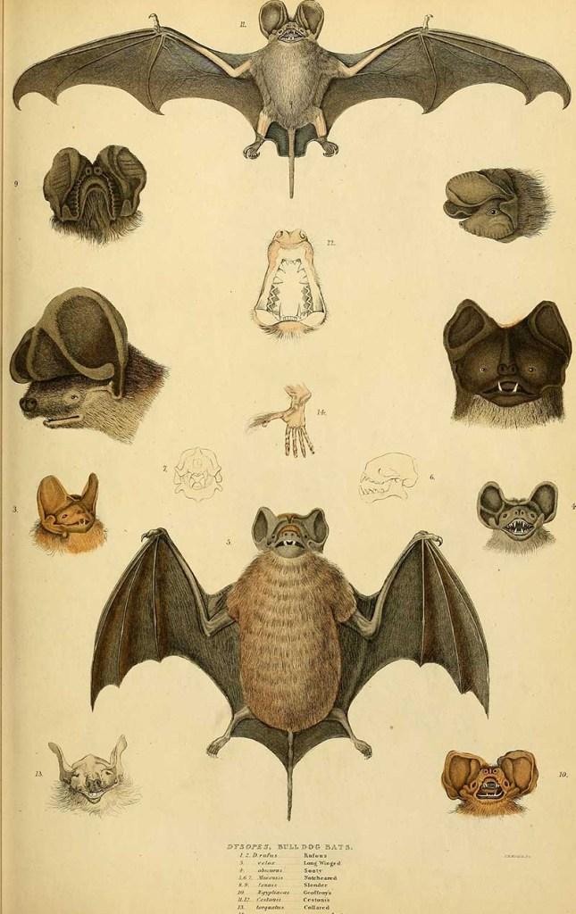 vintage bat poster