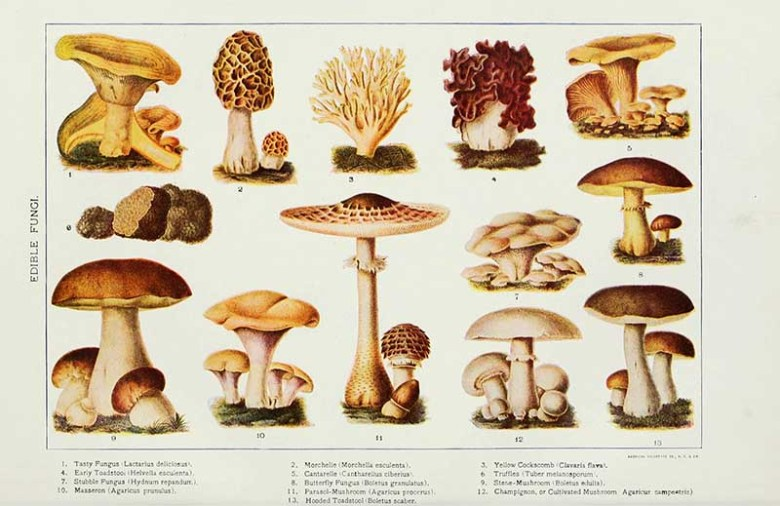 Edible fungi print