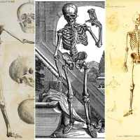 Free Fun Vintage Skeleton Illustrations To Print