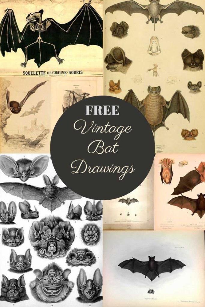 vintage bat drawings