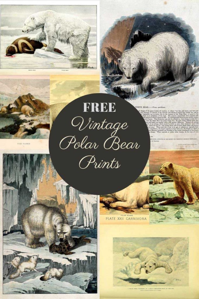 Free vintage polar bear art