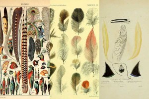 vintage feather images