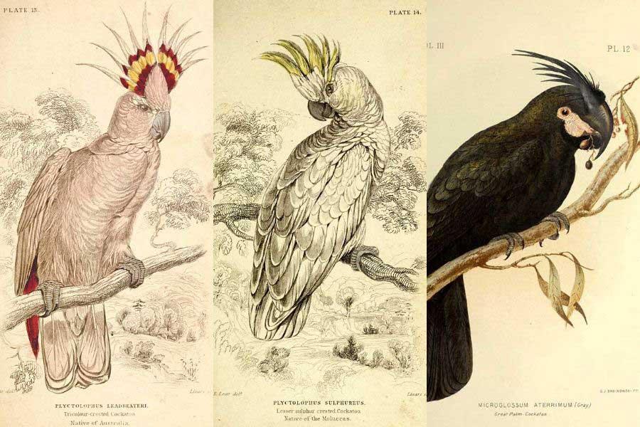John Gould Native Animals Birds print parrot painting Vintage Old Australia art