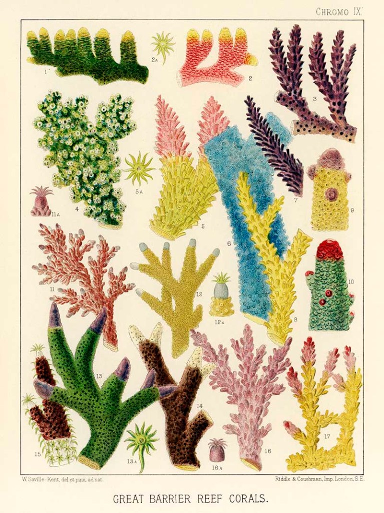 Vintage colorful coral identification posters