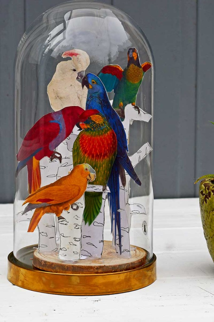 Tropical parrot cloche