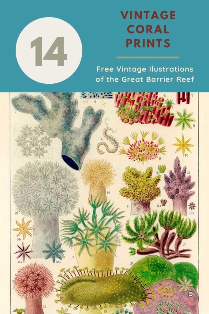 14 vintage coral reef prints