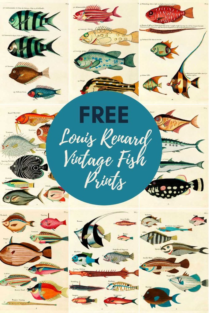 Free Fish paintings by Louis Renard