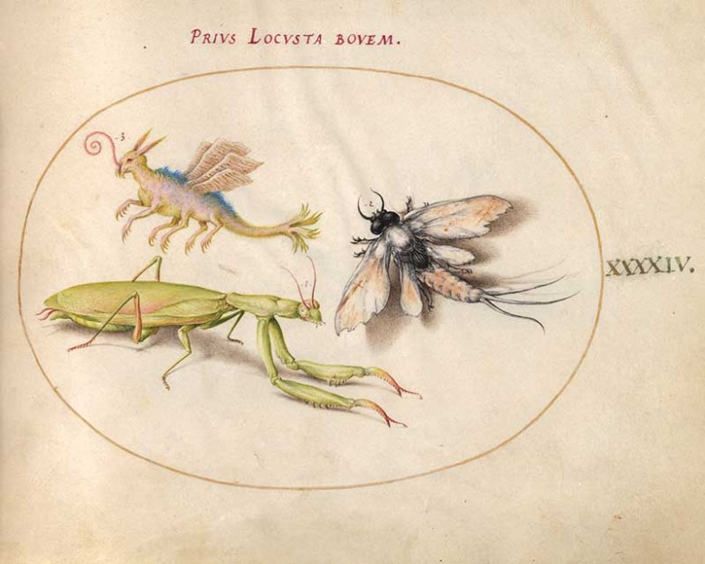 Plate 44 insect art including mantis