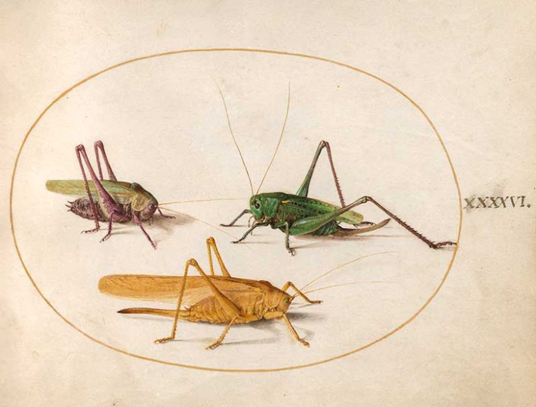 Joris Hoefnagel insect art grasshoppers