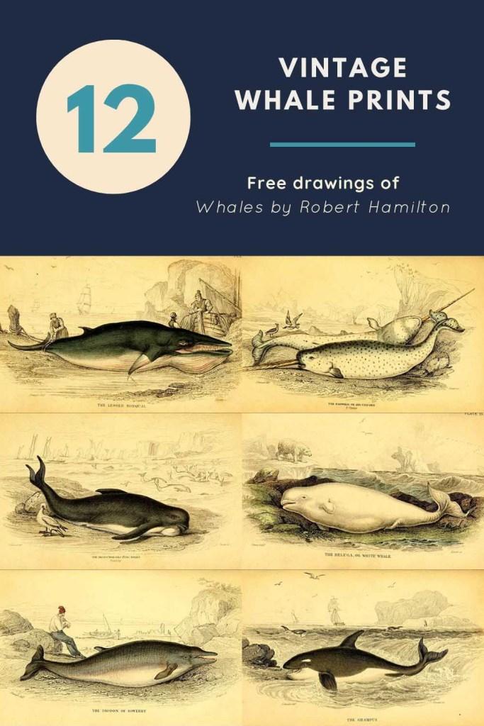 12 vintage whale drawings