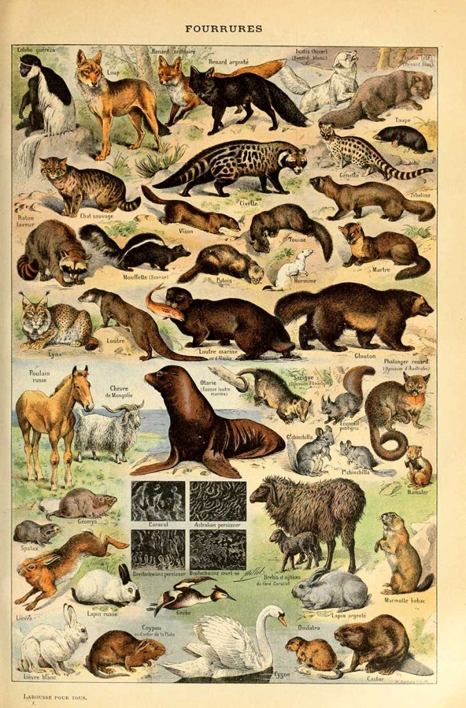 Fur animal poster by Adolphe Millot
