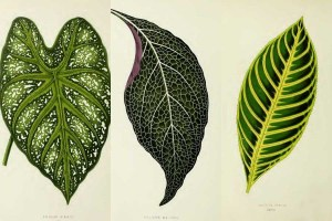 House plant leaves
