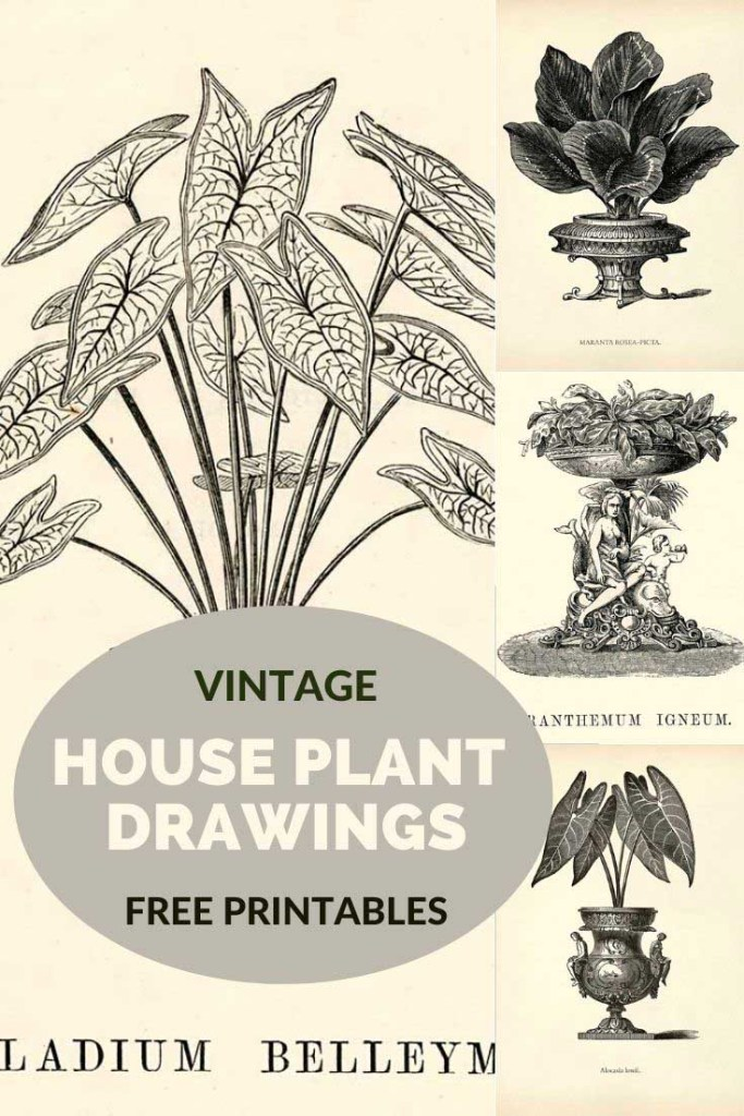 Indoor House Plant drawings