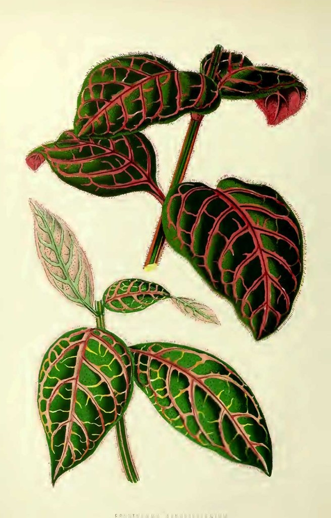 Blood viened leaf house plants drawing