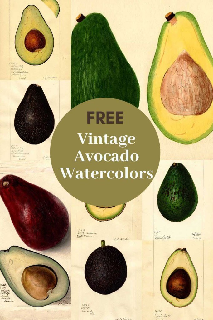 vintage avocado prints