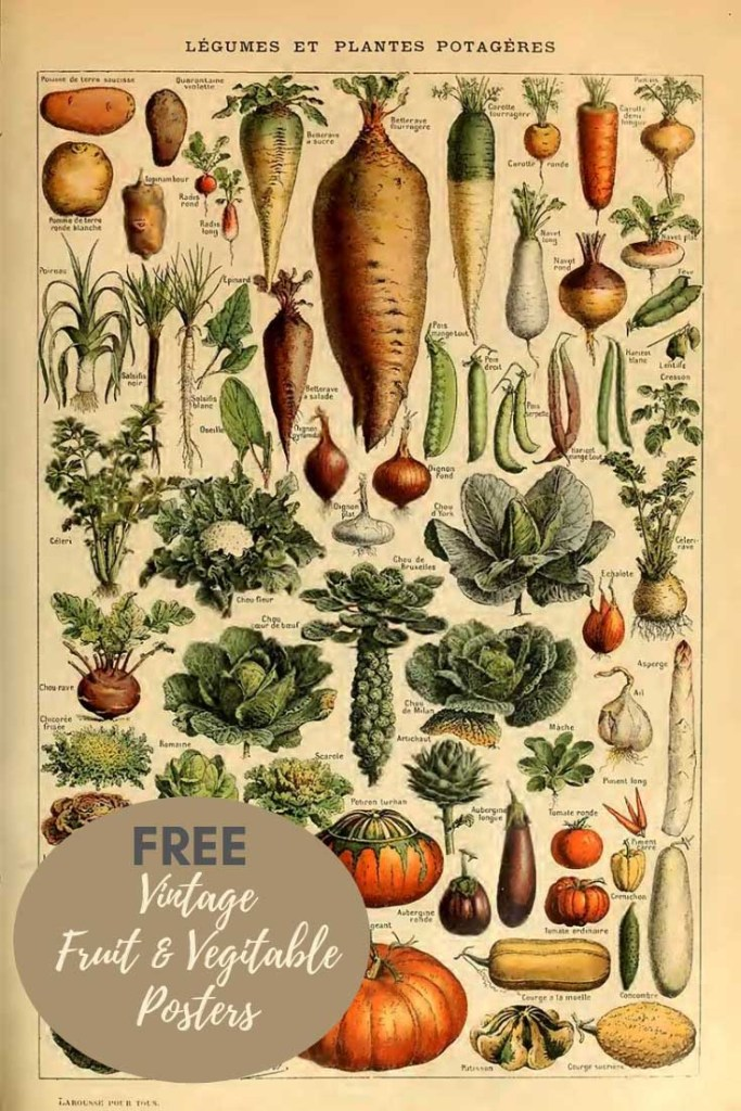 Vintage adlophe Millot fruit and vegitable posters