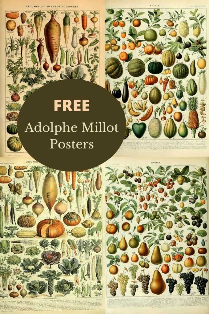 Vintage fruit and vegetable prints