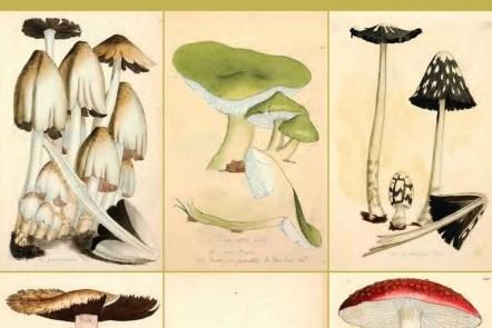 Free fungi and mushroom drawings