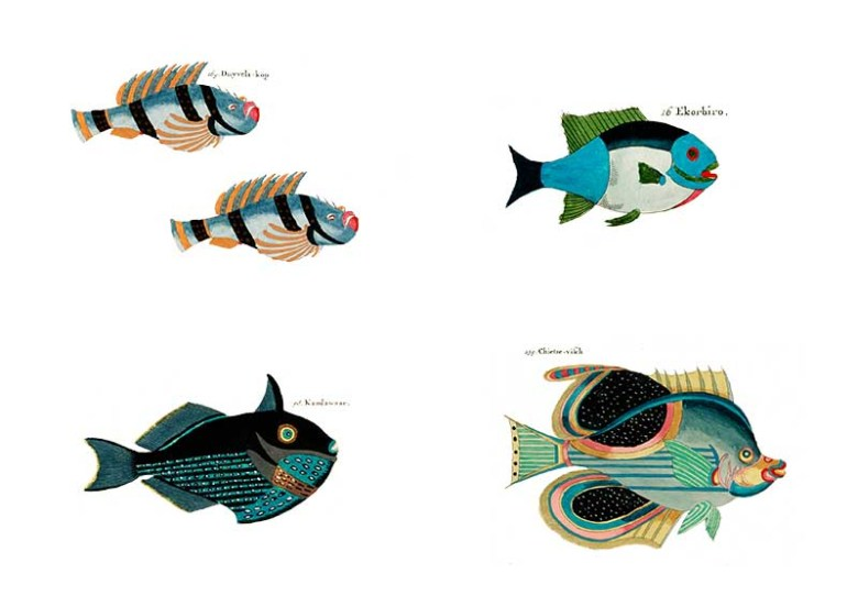 blue rainbow fish pictures
