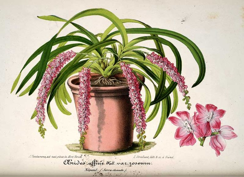 Potted orchid painting