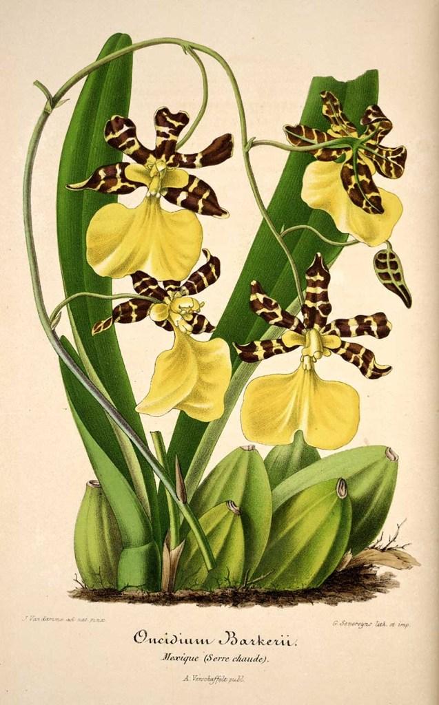 Vintage orchid prints