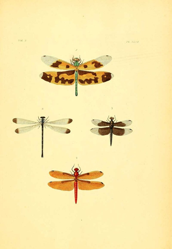 insect posters