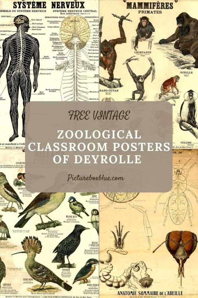 zoological_classroom_deyrolle_posters