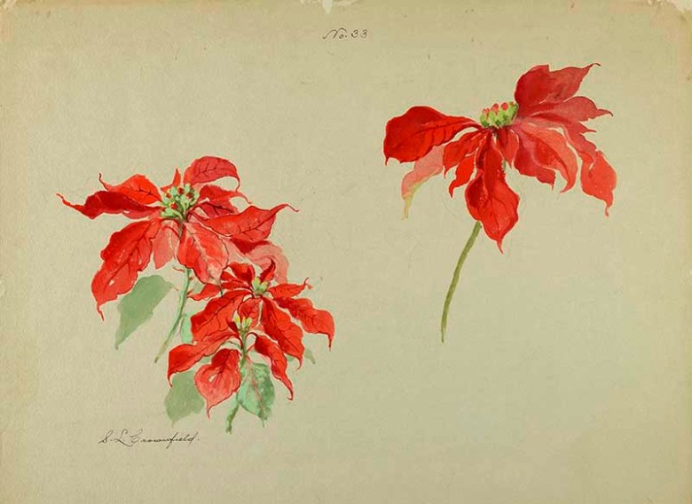 watercolor Poinsettia