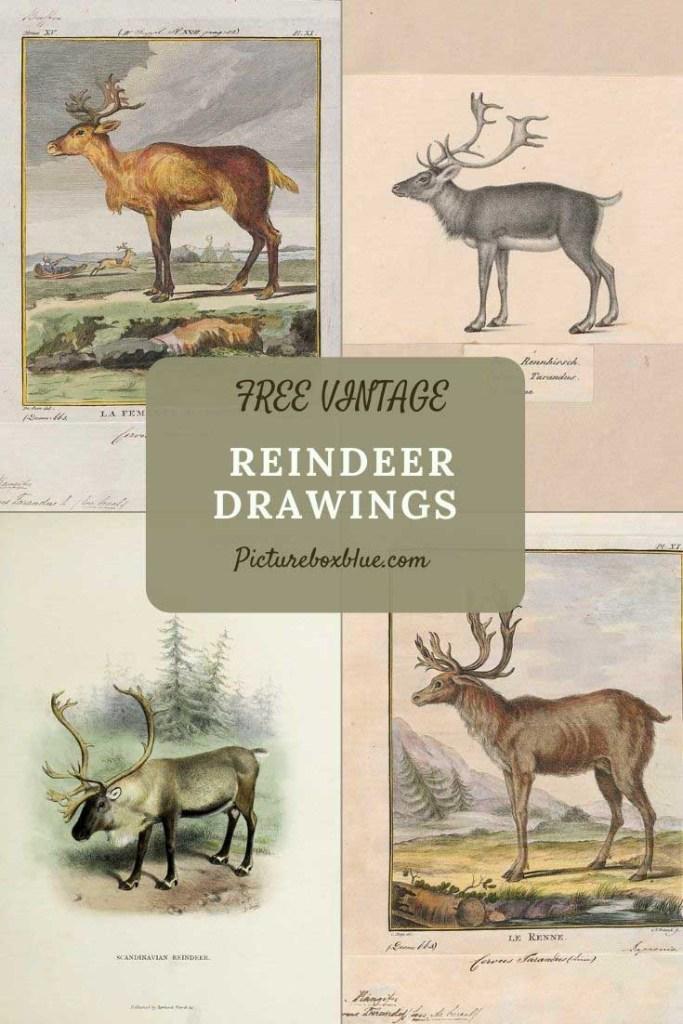 reindeer prints