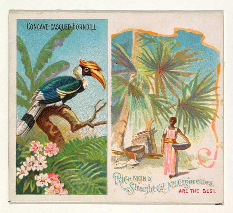 tropical bird illustration hornbill