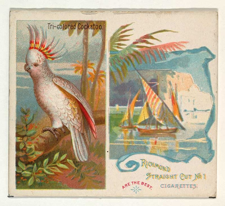 Tri-colored Cockatoo, from Birds of the Tropics series (N38) for Allen & Ginter Cigarettes