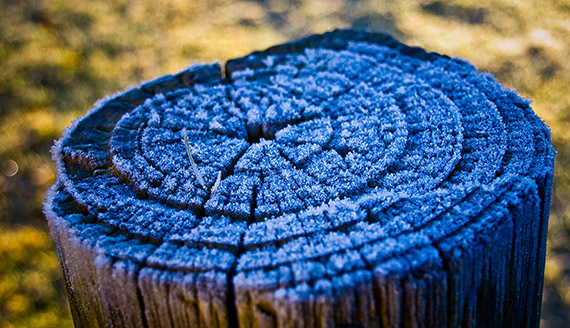 """""""Frost"""" captured by John Nabben. (Click image to see more from John Nabben.)"""