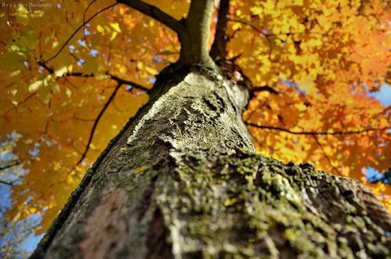 tree unusual perspective