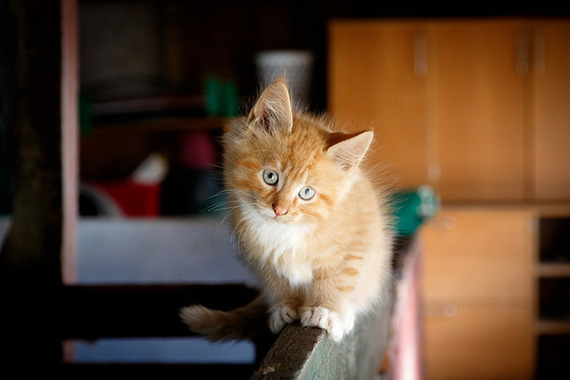 tips for cute kitten pictures