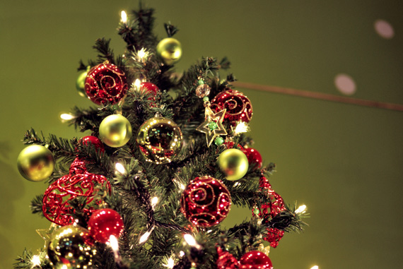 christmas tree photography