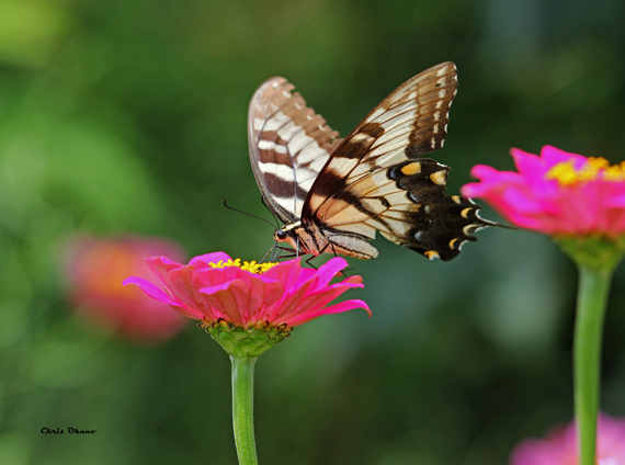 flower and insect photography