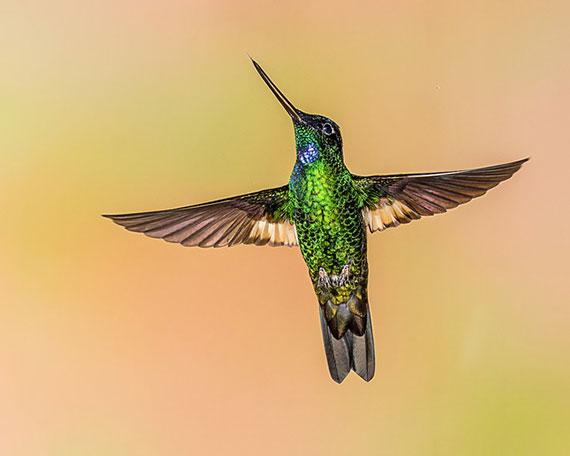 capturing hummingbirds in photographs